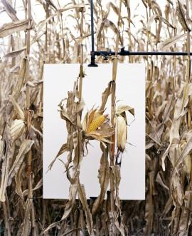 Mathieu Asselin   Monsanto®: The Book